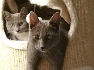 Pandelis & Pepita suchen ein Zuhause