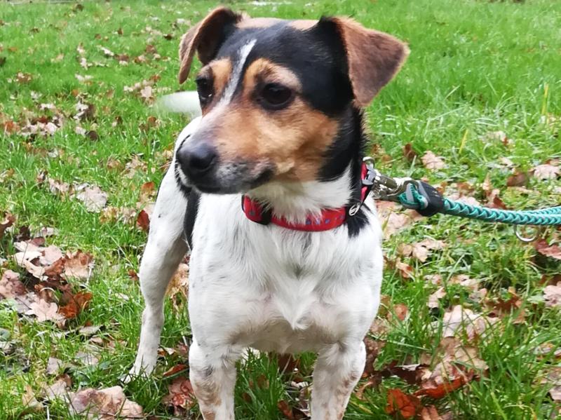 Fanny sucht ein Zuhaue, in dem sie als alleinier Hund leben darf.