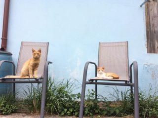 Kater Topolino und Tigger suchen ein Zuhause