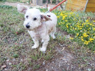 Sousou ist ein ehemaliger Kettenhund. Sie sucht ein schönes Zuhause.